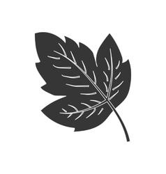 Grape leaf icon vector