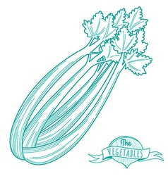 Outline hand drawn sketch of celery flat style vector