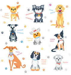 Set colour dogs vector