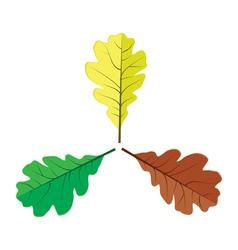 Three oak leaves vector image vector image