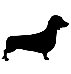 High quality silhouette of Dachshund or basset vector image