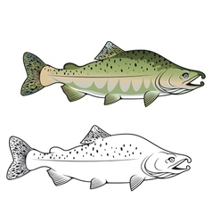Hunchback salmon fish vector