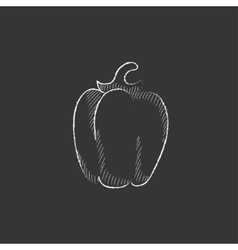 Bell pepper Drawn in chalk icon vector image vector image