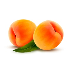 Rpe peach isolated on white vector image