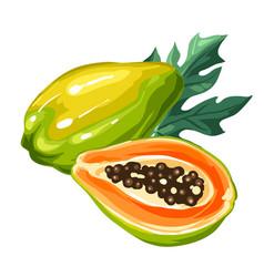 Papaya isolated on white background vector