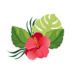 Bouquet with tropical flowers elegant floral vector