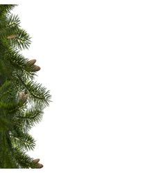 branches of fir vector image