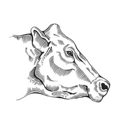 cow head engraving style vector image vector image