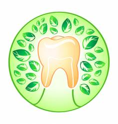 health tooth vector image vector image