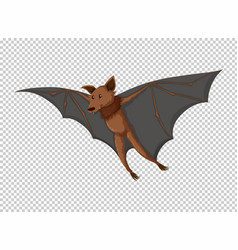 Wild bat flying on transparent background vector
