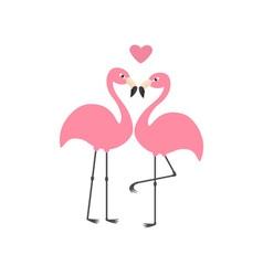 Pink flamingo couple and heart exotic tropical vector