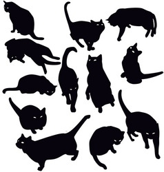 Black cats silhouette vector image vector image