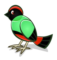 cartoon bird two vector image vector image