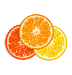 Fresh citrus fruit isolated on white background vector