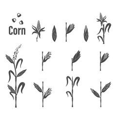 Corn icon - vector
