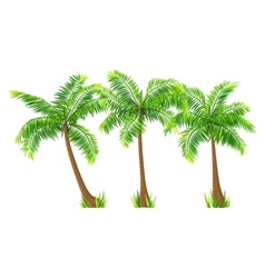 Coconut palm trees set isolated on white vector