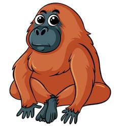 Gorilla with brown fur vector