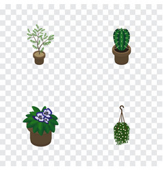 Isometric houseplant set of peyote blossom fern vector