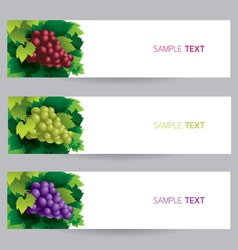 Grape vine banner vector