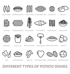 Different types of potato dishes vector