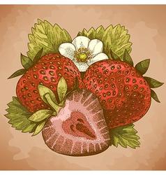 engraving strawberry retro vector image vector image
