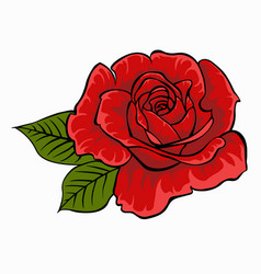 red rose isolated flower on white background vector image vector image