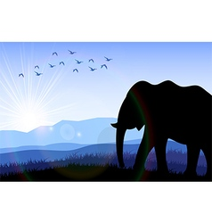 Elephant in the field at dawn vector