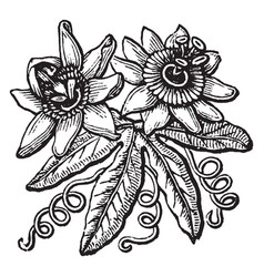 Doodad is an image of two flowers set among vector