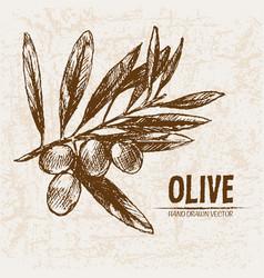 digital detailed line art olive vector image