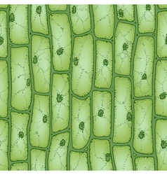 Plant cell pattern2 vector