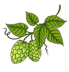 branch of hops pop art vector image vector image