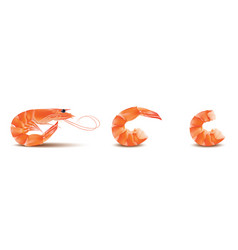 shrimp seafood set prawn with head and vector image vector image