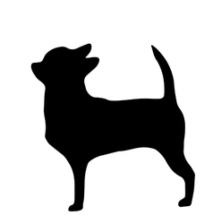 High quality silhouette of chihuahua isolated on vector image