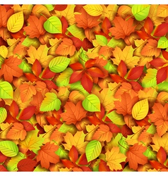 Autumn leaves vector