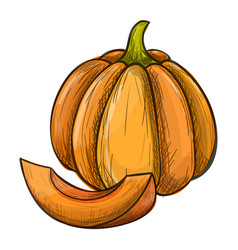 colorful sketch of pumpkin vector image