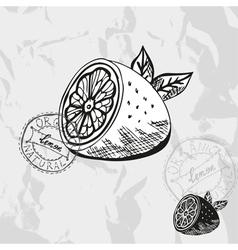 Hand drawn decorative lemon vector image vector image