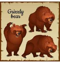 Angry brown bear attacks vector image