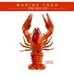 Red lobster marine food vector