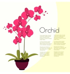 Coloful pink orchid in the pot vector image