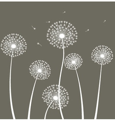 Decoration with dandelion vector