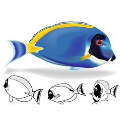 Powder blue tang set vector