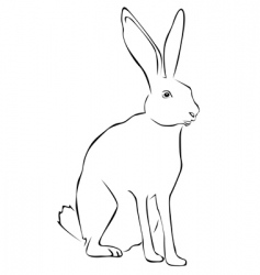 tracing of a hare vector image