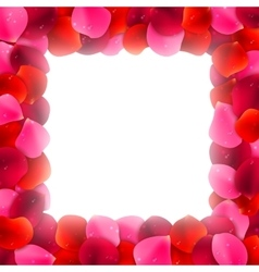 Rose petals frame vector