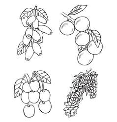 Fruits and berries honeysuckle and buckthorn vector