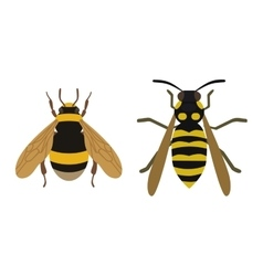 Honey yellow bee fly insect vector