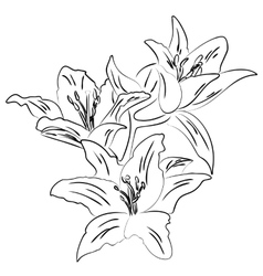 Lily with bud outline sketch vector image vector image