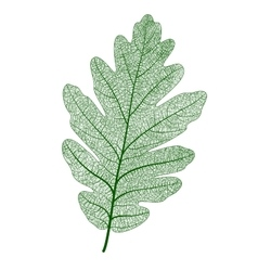 oak leaf isolated vector image vector image