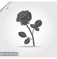 rose - vector image