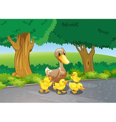 A mother duck and her ducklings at the road vector image