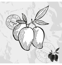 Hand drawn decorative mango vector